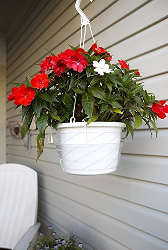 Curtis Wagner Hanging Basket (10 Inch - 5 Pack)