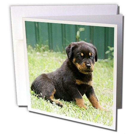 3dRose Rottweiler puppy - Greeting Cards, 6 x 6 inches, set of 6 (gc_4340_1)