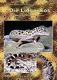 Die Lidgeckos: Pflege, Zucht und Lebensweise