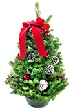 KaBloom Holiday Collection: Classic Tabletop Tree (18in) of Fresh Balsam from Maine