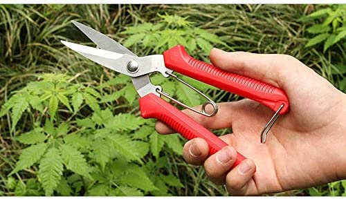 Professional Bypass Pruner Hand Shears, Gardening Shears, Clippers for Plants, Tree Trimmers Secateurs, Hedge Garden Shears, Trimming, Garden Tools (Red) 1yess