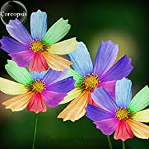 Amazing Rainbow Coreopsis, 50 Seeds, rare cosmos chrysanthemum home garden flowers TS229T