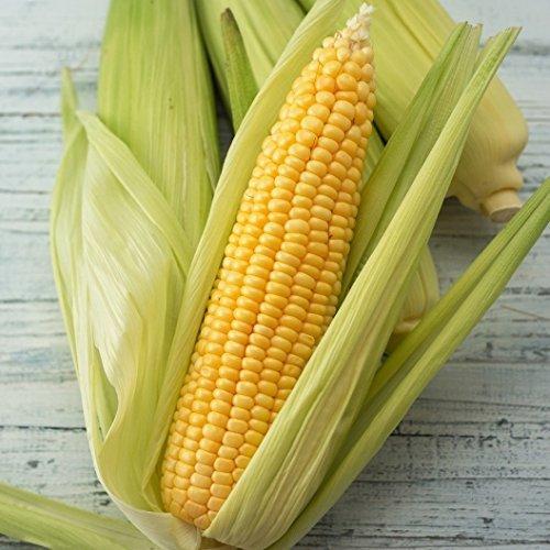 David's Garden Seeds Corn Sweet Golden Beauty SL114 100 Heirloom - Chino Shoppes