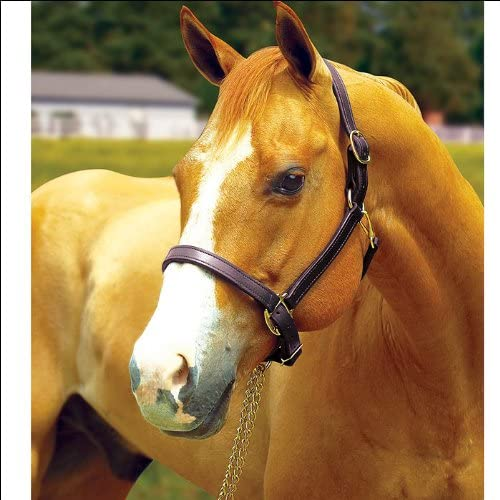 Perri's Horse Max 48% OFF free shipping 1-Inch Turnout Halter
