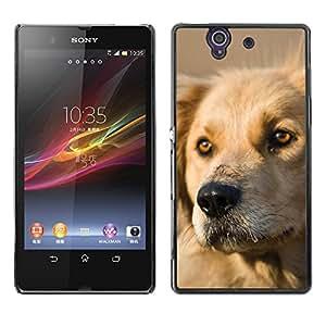 Vortex Accessory Carcasa Protectora Para Sony Xperia Z L36H C6602 C6603 C6606 C6616 - Labrador Retriever Dog Golden Canine Pet -