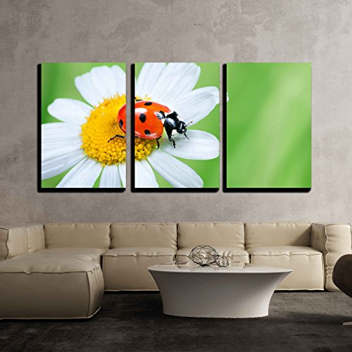 wall26 - 3 Piece Canvas Wall Art - Ladybug on Daisy in the Grass - Modern Home Decor Stretched and Framed Ready to Hang - 16