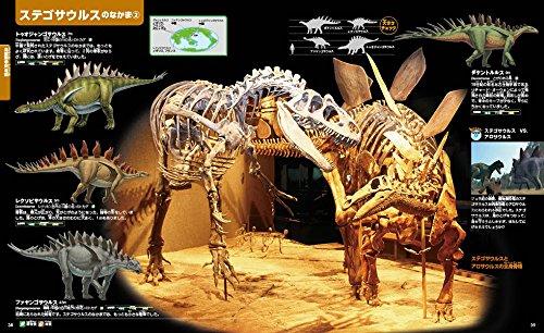 ステゴサウルスの仲間と骨格