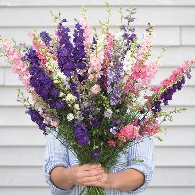 David's Garden Seeds Flower Larkspur Mix SL1785 (Multi) 100 Non-GMO, Open Pollinated Seeds