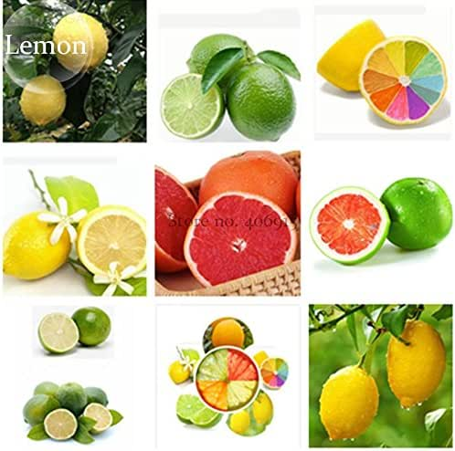 2018 Hot Sale!! Rare Heirloom Mixed 9 Types of Lemon Tree, 20 Seeds, Indoor Outdoor Planting Available E3789