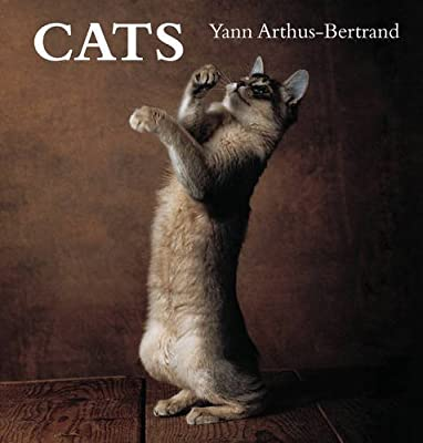 Cats (Spanish Edition) (2006-11-09)
