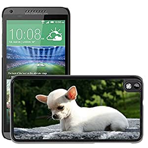 Hot Style Cell Phone PC Hard Case Cover // M00111694 Animal Dog Chihuahua Chihuahua Puppy // HTC Desire 816