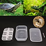 Richi Reptile Incubator Tray with Thermometer