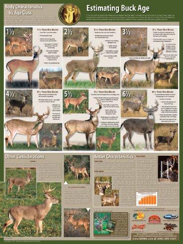 Selective Buck Harvest Poster by Quality Deer Management Association