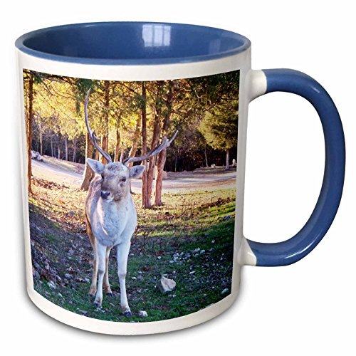 (3dRose Jackie Popp animals - Fallow Deer - 15oz Two-Tone Blue Mug (mug_195149_11))