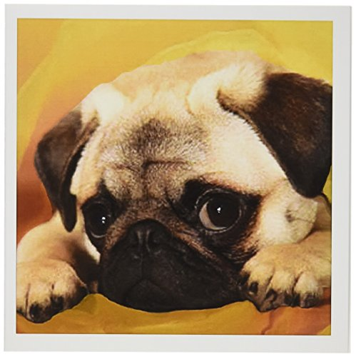 3dRose Pug - Greeting Cards, 6 x 6 inches, set of 12 (gc_3644_2)