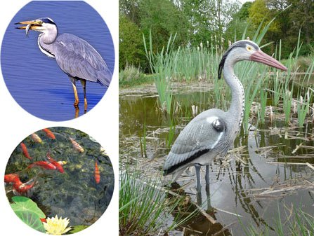 Decoy Heron Bird Scarer (784) Protect Your Pond from Heron, Birds, Cats. by Country Club
