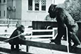 Koko: A Talking Gorilla (The Criterion Collection)