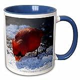 3dRose Lee Hiller Photography Hot Springs National Park Wildlife - Birds Male Cardinal Eating Frozen Snow - 11oz Two-Tone Blue Mug (mug_18036_6)