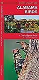 Alabama Birds: A Folding Pocket Guide to Familiar Species (A Pocket Naturalist Guide)