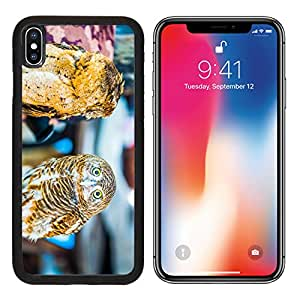 MSD Premium Apple iPhone X Aluminum Backplate Bumper Snap Case IMAGE ID: 37318118 Young owl Thailand