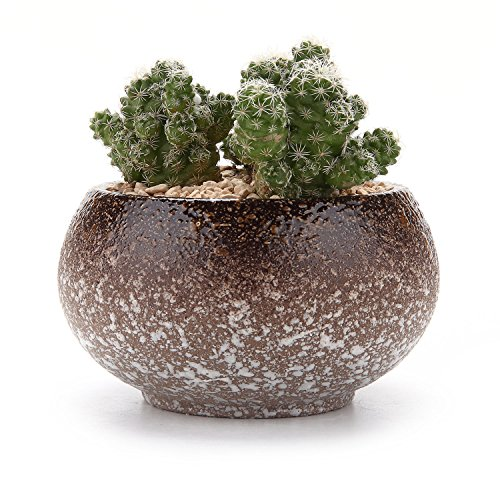 small flower pots with seeds - 6