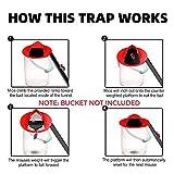 RRRODMAN - Flip N Slide Bucket Lid Mouse Trap Door