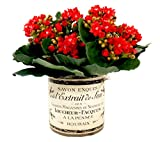 Creative Displays Orange Kalanchoe in French-Themed Pot Faux Floral, Small, Red