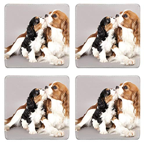 MSD Drink Coasters 4 Piece Set Image ID: 12195265 Litter of Cavalier King Charles spaniel monter and puppy