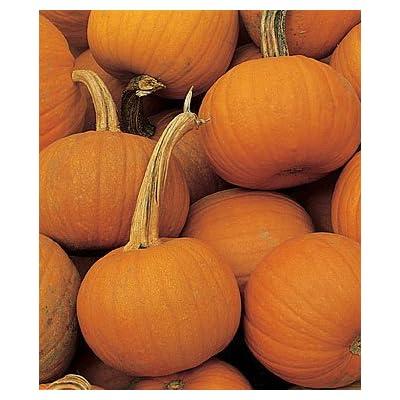 Burpee Pumpkin Small Sugar 64184 (Orange) 15 Organic Heirloom Seeds : Vegetable Plants : Garden & Outdoor
