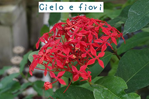 Fiori U.Cielo E Fiori Italian Edition Kindle Edition By K U Arts