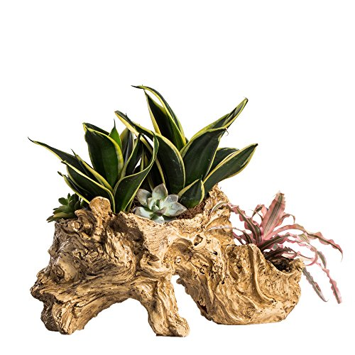 NCYP Artificial Twisted Driftwood Planter Resin Tree Toot Flower Pot Large Sculpture Succulent Air Plants Multilayer Irregular Hallow Out Holder for Decoration No Plants 13 X 5.5 X 7 (Twisted Pedestal)