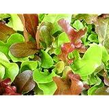 500+ Mesclun Lettuce Seeds- Salad Mix- 500+ Seeds