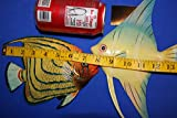 Salty Pelican Under The Sea Childs Bathroom Wall Decor, Moisture Resistant 3-D Poly-resin 8 inch Fish Bundle of 2 ITems