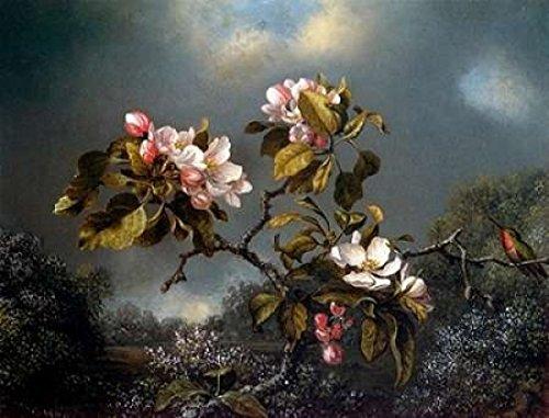 apple-blossom-and-hummingbird-poster-print-by-martin-johnson-heade-9-x-12