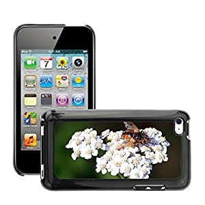 Print Motif Coque de protection Case Cover // M00237256 La ingesta de insectos Syrphidae Umbel // Apple ipod Touch 4 4G 4th
