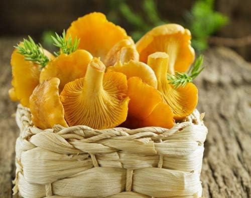 Samen rling Lisichki Yellow Myzel Spawn Getnete Spores Uke Portal Cool Samen Paket