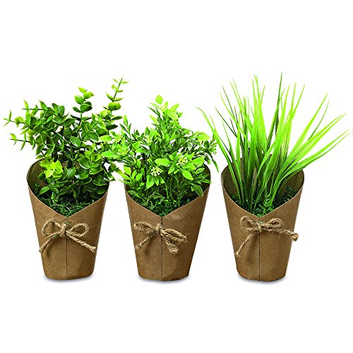 The Brown Paper Wrapped Faux House Plants, Realistic Collection, 6 Pack , Twine Bows, 2 Mimosa, 2 Baby Eucalyptus, 2 Grass, 8 3/4 Inches Tall, By Whole House Worlds (Paper Topiary)