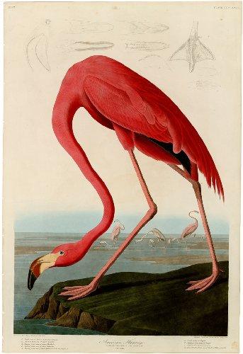 John James Audubon's