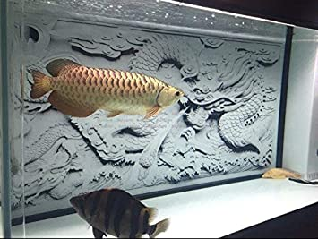 Fidgetgear Hd Aquarium Background Poster Diy Fish Tank Wall Decorations Grey Dragon Cameo 48 X 24 122 X 61cm Pet Supplies Dprd Tasikmalayakab Go Id