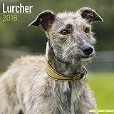 Lurcher Calendar - Dog Breed Calendars - 2017 - 2018 wall Calendars - 16 Month by Avonside