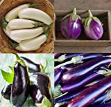 David's Garden Seeds Collection Set Eggplant Open Pollinated 4432 (Multi) 4 Varieties 200 Seeds (Non-GMO, Open Pollinated, Heirloom, Organic)