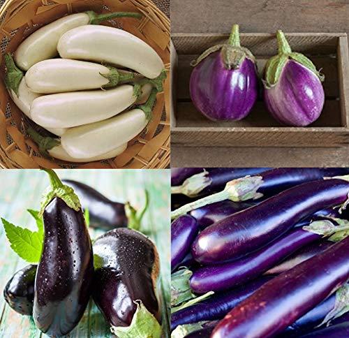 David's Garden Seeds Collection Set Eggplant Open Pollinated XU432 (Multi) 4 Varieties 200 Seeds (Non-GMO, Open Pollinated, Heirloom, Organic)