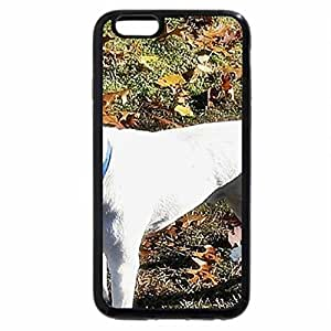 iPhone 6S / iPhone 6 Case (Black) Jack Russell-Meet Max!