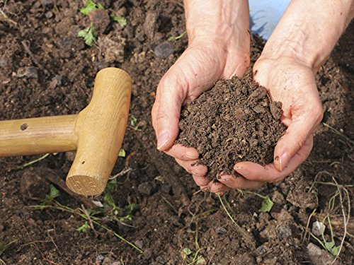 Prepare Healthy Soil and Plant for Spring (Composting Beginner)