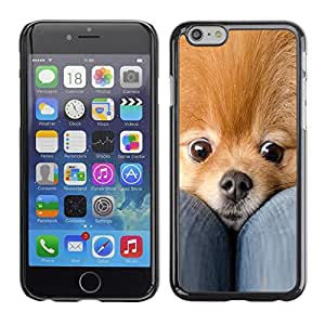 PC/Aluminum Funda Carcasa protectora para Apple Iphone 6 Plus 5.5 Pomeranian Dog Pet Cute Fur Gold / JUSTGO PHONE PROTECTOR