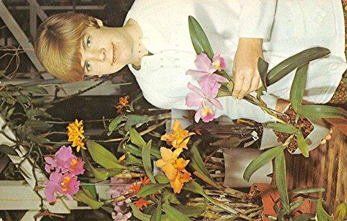 Costa Mesa California Paul Brecht Orchid Co Vintage Postcard K67965 ()