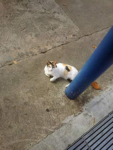 Home Comforts Framed Art for Your Wall Kitten Animal Feline Pillar Cat Kitty Pet Under Vivid Imagery 10 x 13 Frame ()
