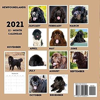 Newfoundland 2021 Hund Rasse Kalender 15/% OFF Multi Bestellungen