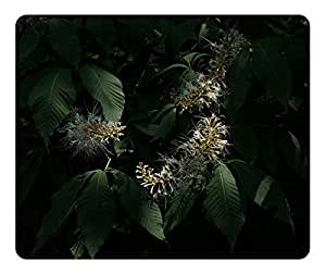 Bottlebrush Buckeye Aesculus Parviflora Mouse Pad Desktop Mousepad Laptop Mousepads Comfortable Computer Mouse Mat Cute Gaming Mouse pad
