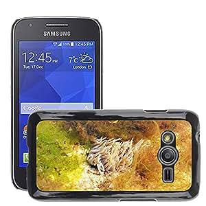 Etui Housse Coque de Protection Cover Rigide pour // M00108741 Actinia equina Abrir Anemone Anemone // Samsung Galaxy Ace4 / Galaxy Ace 4 LTE / SM-G313F